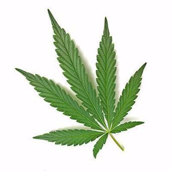 L`affaiblissement des facultés et le cannabis au travail (CCHST) Online Training Course